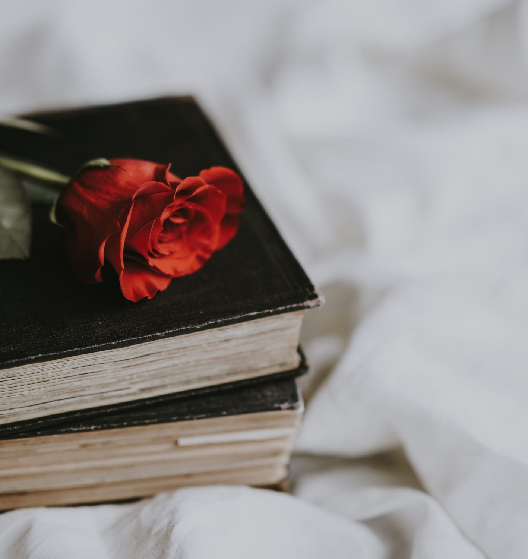 Rose auf einem Buch