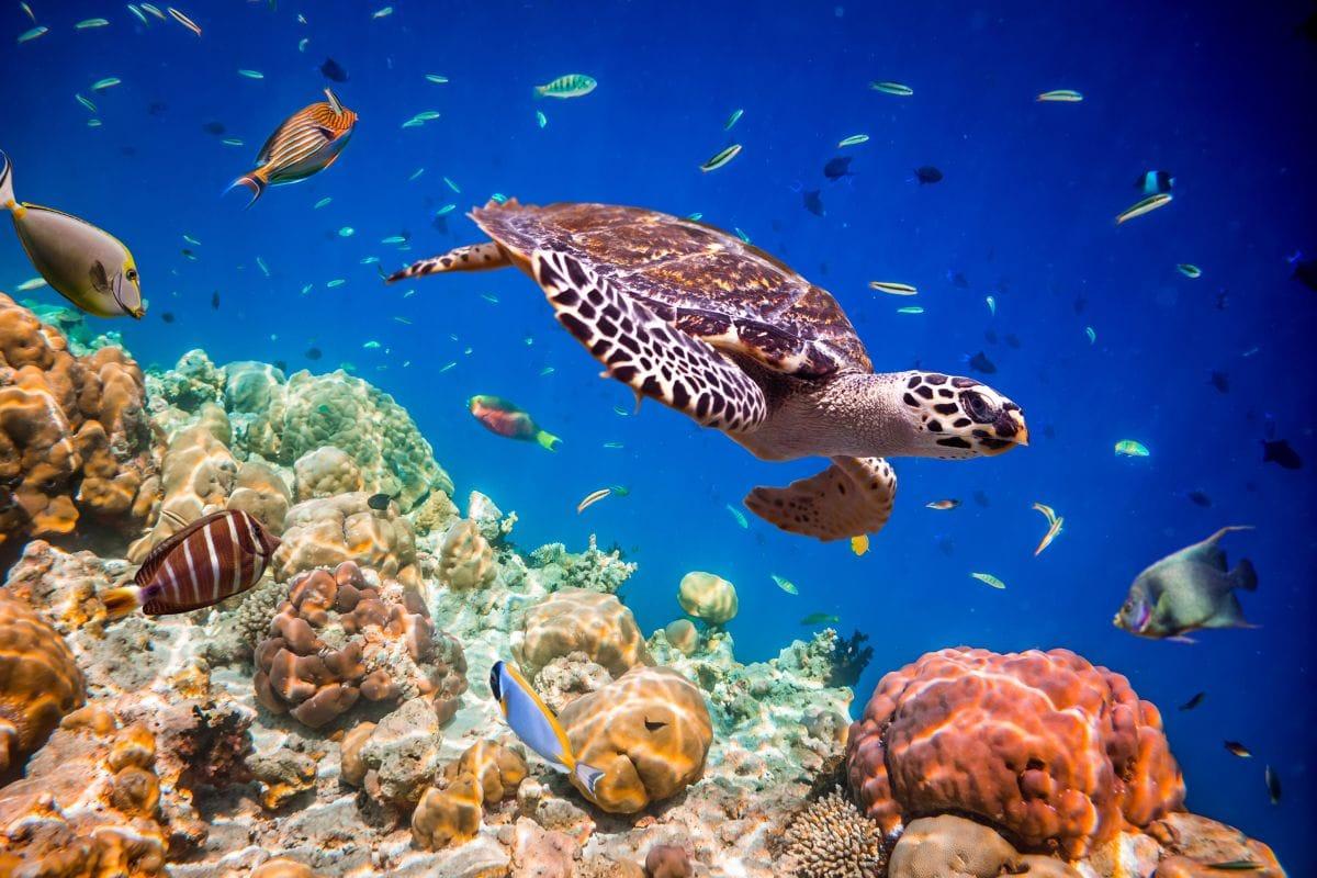 flitterwochen auf den malediven  die unterwasserwelt